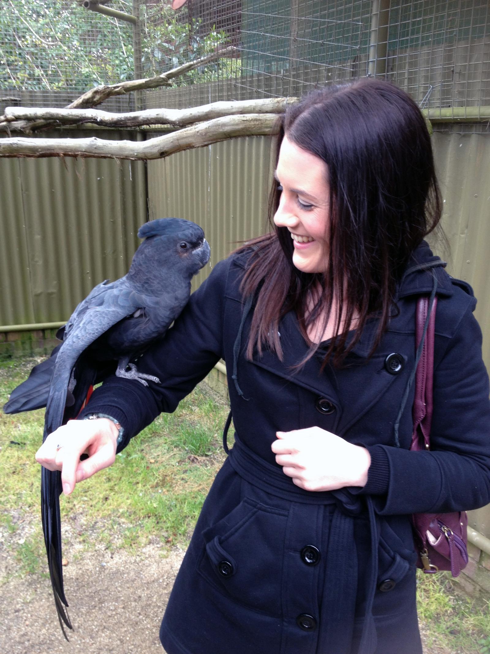 Jumping into an enclosure at Ballarat Bird Santuary